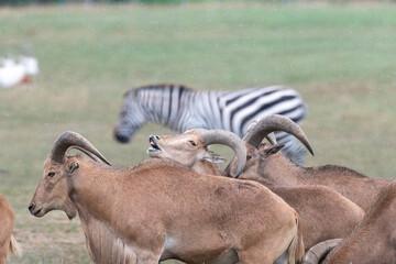 wildebeest in serengeti national park tanzania africa Wall mural