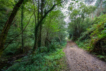 Panorama view of Trabada Forest in Galicia