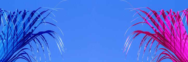Photo sur Plexiglas Palmier Palmes couleurs