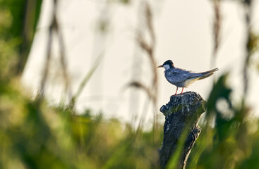 Bird on a broken log with the background out of focus
