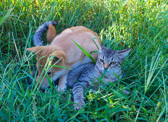 Two friends shiba inu puppy and tabby cat