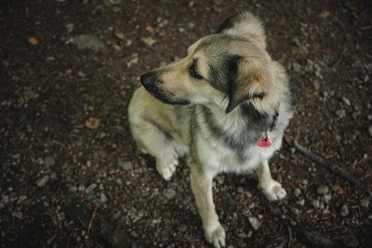 cachorro en tierra