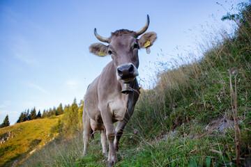 Die Kuh in den Alpen Wall mural