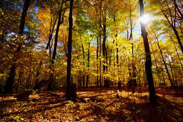Fototapeta Autumn views