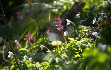 Frühblüher im Wald