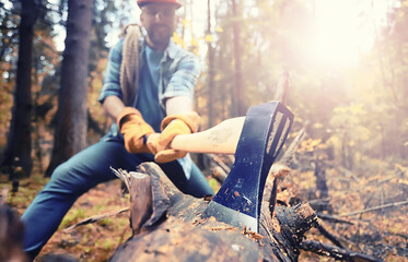 Male worker with an ax chopping a tree in the forest.