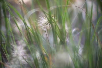 Ziergräser im Garten