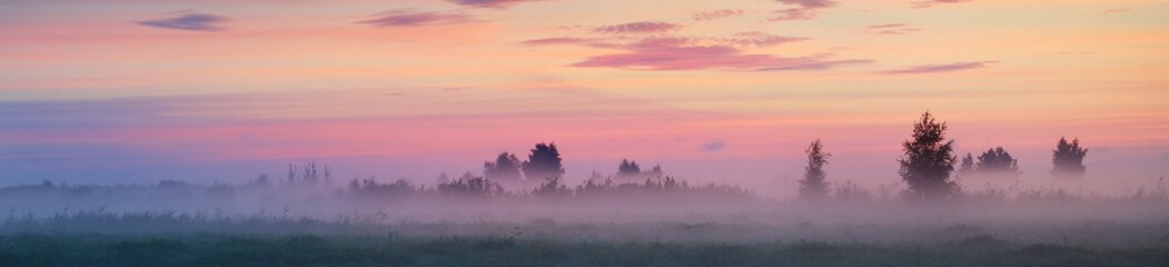 Country field in a fog at sunrise. Tree silhouettes in the background. Pure golden morning sunlight. Epic pink clouds. Idyllic rural scene. Concept art, fairytale, picturesque scenery. Panoramic image