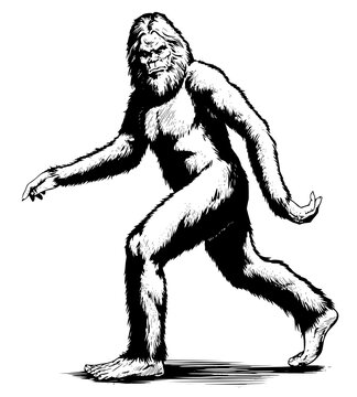 walking sasquatch black white vector Sasquatch, Bigfoot, Foot, Big, Walking, Black, White, Yeti, Illustration, Animal, Mascot, Funny