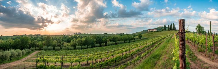 Spring stormy sunset in the vineyards of Collio Friulano, Friuli-Venezia Giulia, Italy