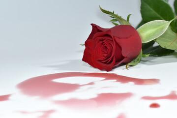Fototapeta Świeże, pachnące, kolorowe róże na różnych tłach. obraz