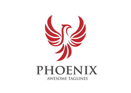 best phoenix bird logo design,luxury phoenix logo concept,  phoenix vector logo