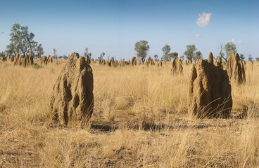 'Magnetic' Termite Mounds - Northern Territory, Australia