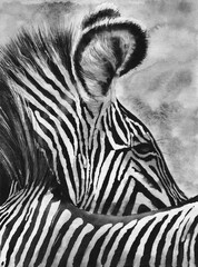 Watercolor illustration of a zebra with contrasting black and white stripes on a grey background