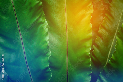 Wall mural closeup nature view of green leaf texture, dark wallpaper concept, nature background, tropical leaf