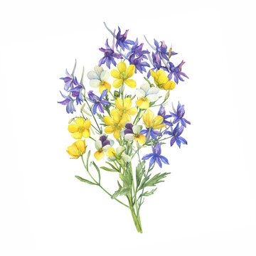 Bouquet with wild pansy, field larkspur and yellow meadow buttercup flowers. Watercolor hand drawn painting illustration isolated on white background
