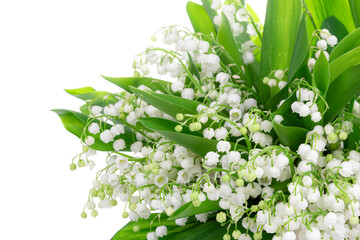 Poster de jardin Muguet de mai lilies of the valley isolated on white background