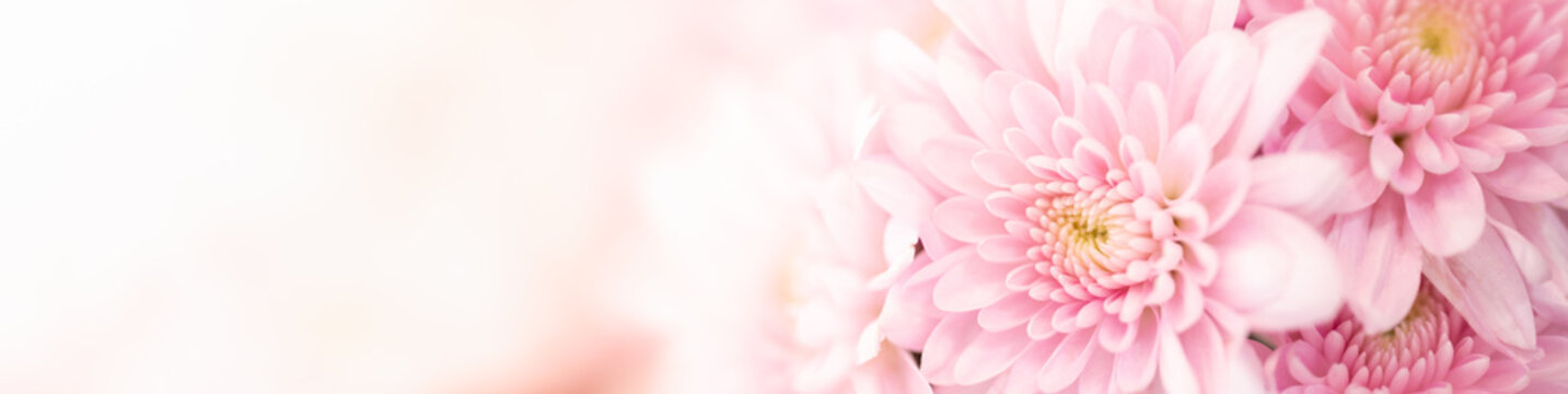 Nature of pink flower in garden using as background natural flora cover page