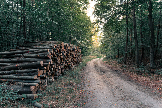 Wood pile in the forest near logging road or path at sunset