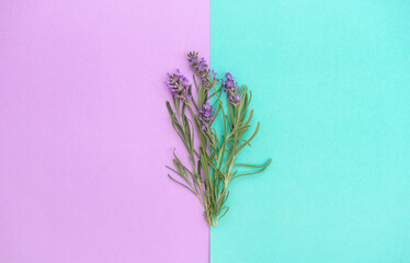 Lavender flowers herb leaves turquoise lila background Floral banner