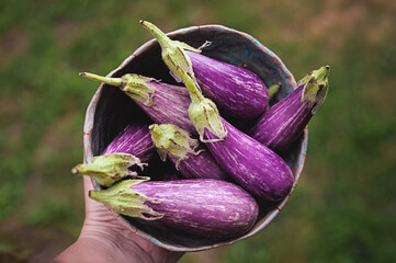hand holding rustic bowl of eggplant