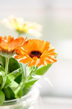 Orange calendula flowers in a glass jar