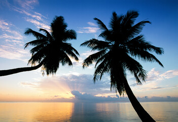 Leaning palm trees at sunset, Anse Severe, La Digue, Seychelles, Indian Ocean, Africa
