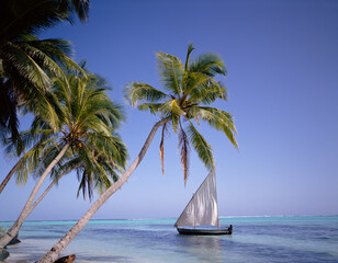 Sail boat by palm trees. The Maldives.
