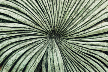 Rough texture in the shape of a cactus