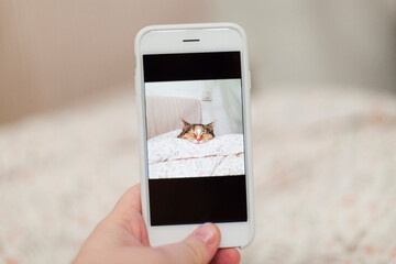 Detail of hand holding mobile phone taking picture of cat sleeping on bed
