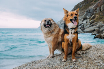 Two happy dogs sitting on a rock at the beach