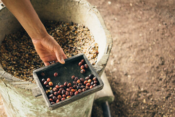 Hulling Coffee Beans