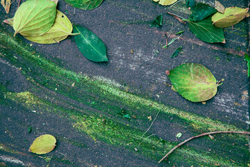 Smeared Chlorophyll and Leaves on Pavement