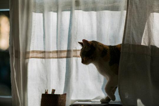 Side view of cat on windowsill in sunset light