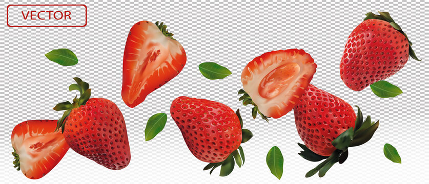Realistic strawberry on transparent background. Whole strawberries, sliced strawberries with with green leaves. Illustration for your poster, banner, natural product. 3D vector illustration.