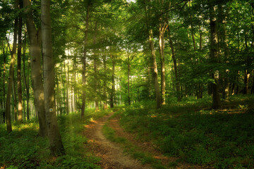 Trail in the colorful green spring forest in Hungary