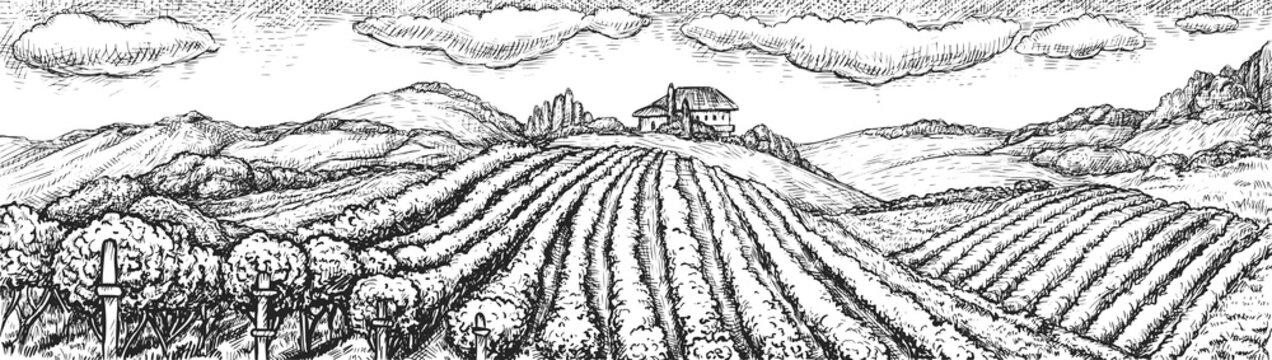 Vineyard landscape. Hand drawn rustic vineyard seamless rural landscape sketch doodle illustration. Vine grape bush plantation field on hill and winery building on background. Viticulture vector