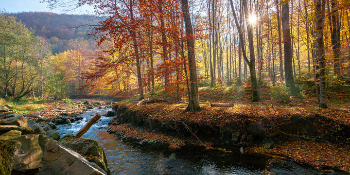 small mountain river among the forest. beautiful nature scenery at sunrise. beech trees in colorful foliage. sunny weather