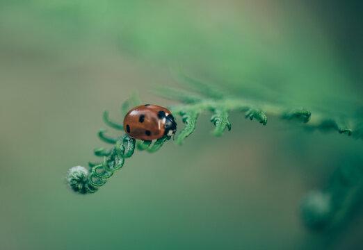 Ladybug on a green plant.