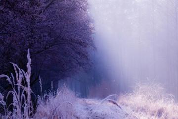 Leśna droga w mroźny poranek