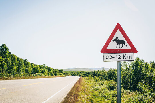 Moose warning sign at a Highway in Norway, Scandinavia
