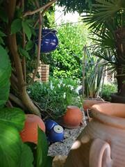 Fototapeta Widok na patio ze śródziemnomorską roślinnością. Akcenty w stylu prowansalskim. Ceglasty mur otoczony zielenią. obraz