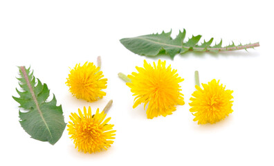 Wall Murals Floral Dandelion Flowers Isolated.
