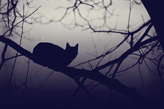 Bewitched: silhouette of cat perching on leafless branch in misty wood at night