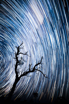 Star lapse night shot with a tree silhouette