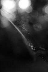 black and white spider in a web portrait