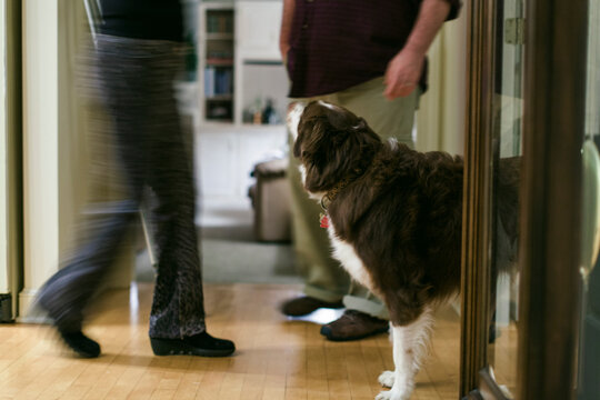 A dog looks up at his owners as they walk by him inside the hous
