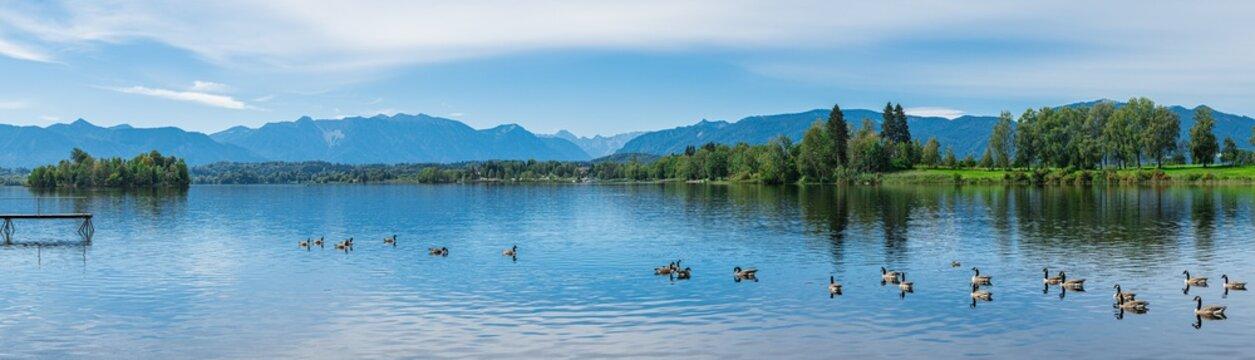 Staffelsee Panorama bei Murnau in Bayern mit Alpenblick am Horizont und Enten auf dem See
