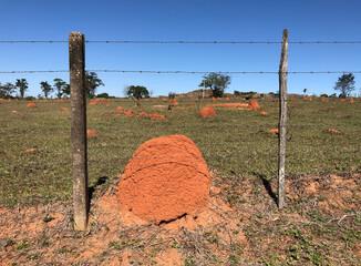Many termite mounds on a farm in Brazil.