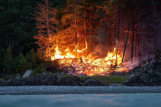 Intense flames from a massive forest fire at night. The flames light up at night as they rage through the forests, against the backdrop of the mountains and the river